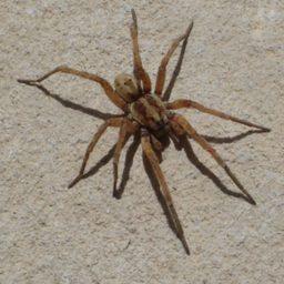 Уничтожение пауков в Минеральных Водах